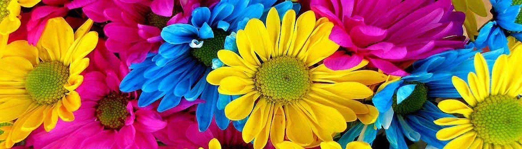 Collections - Fleurs & botanique